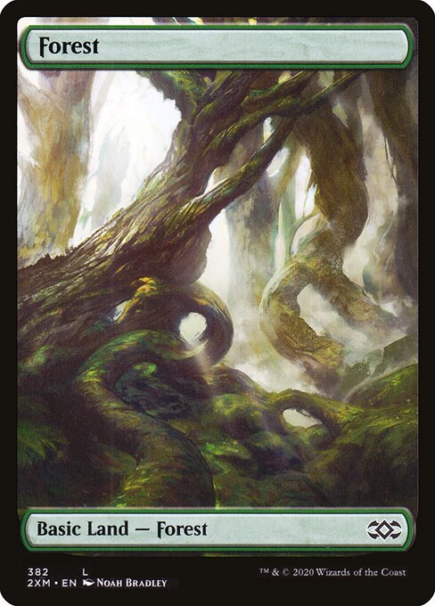Forest (2XM)